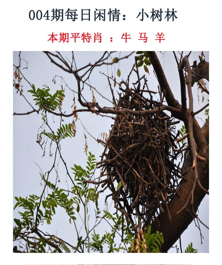004期每日闲情:小树林