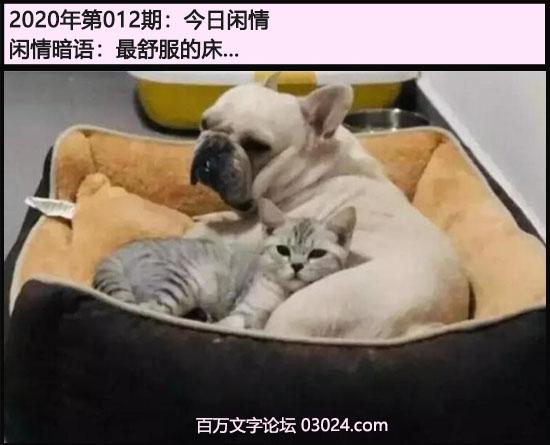 012期今日闲情:最舒服的床...