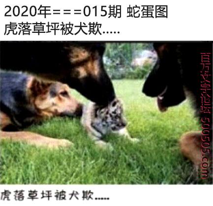 015期蛇蛋图:虎落草坪被犬欺.....