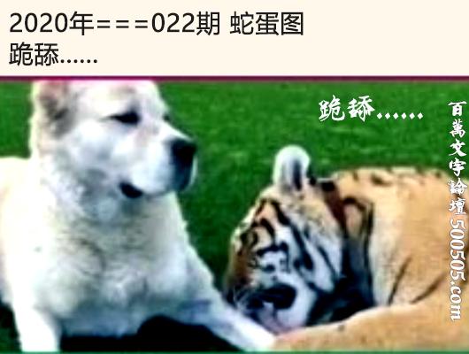 022期蛇蛋图:跪舔......