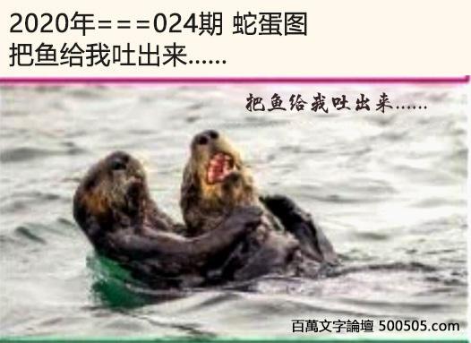 024期蛇蛋图:把鱼给我吐出来....