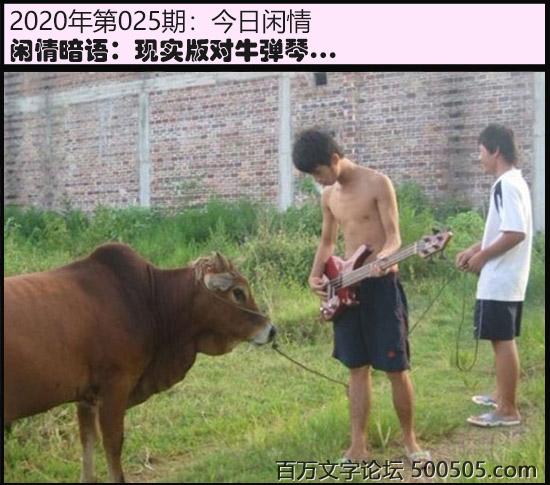 025期今日闲情:现实版对牛弹琴...