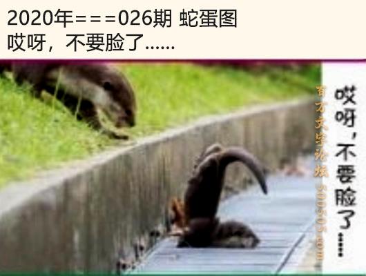026期蛇蛋图:哎呀,不要脸了......
