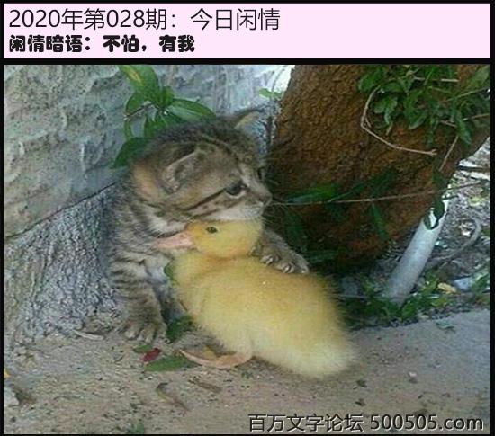 028期今日闲情:不怕,有我
