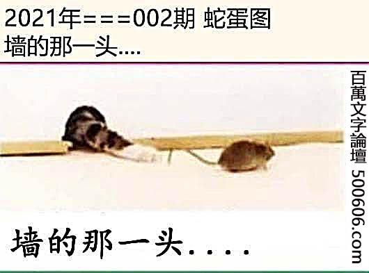 002期蛇蛋图:墙的那一头....