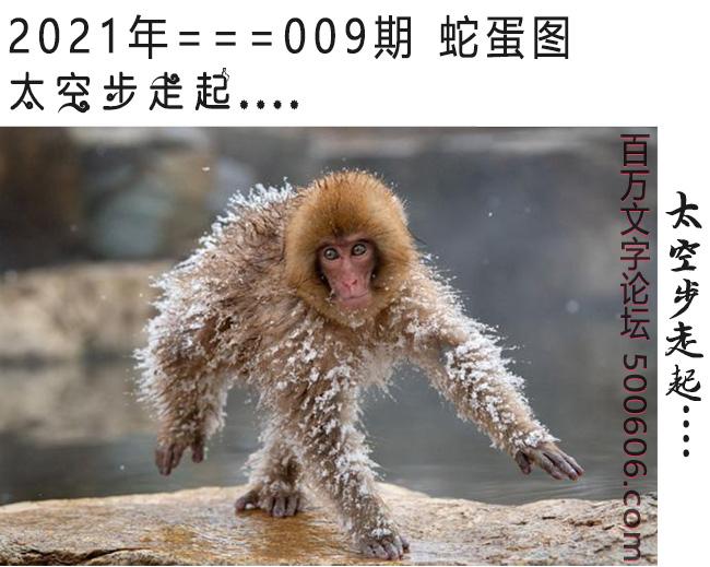 009期蛇蛋图:太空步走起....