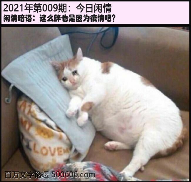 009期今日闲情:这么胖也是因为疫情吧?