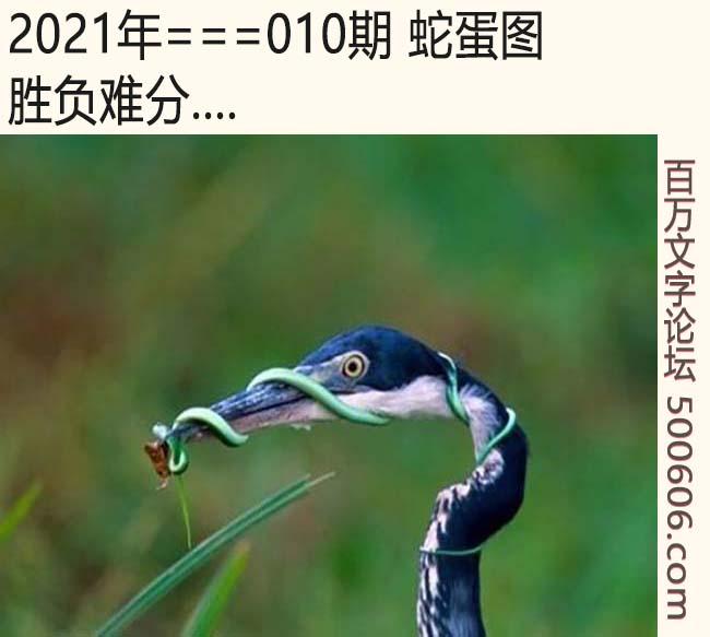 010期蛇蛋图:胜负难分....