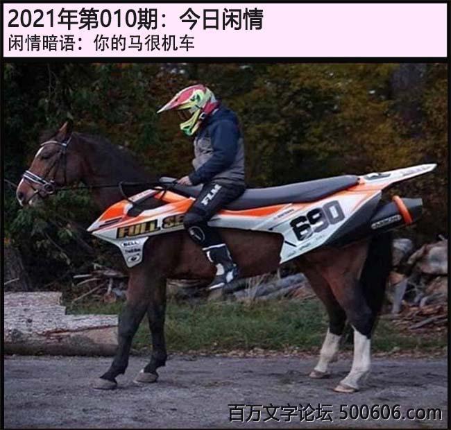 010期今日闲情:你的马很机车