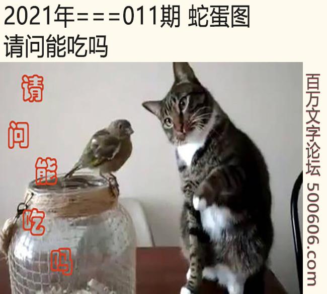 011期蛇蛋图:请问能吃吗