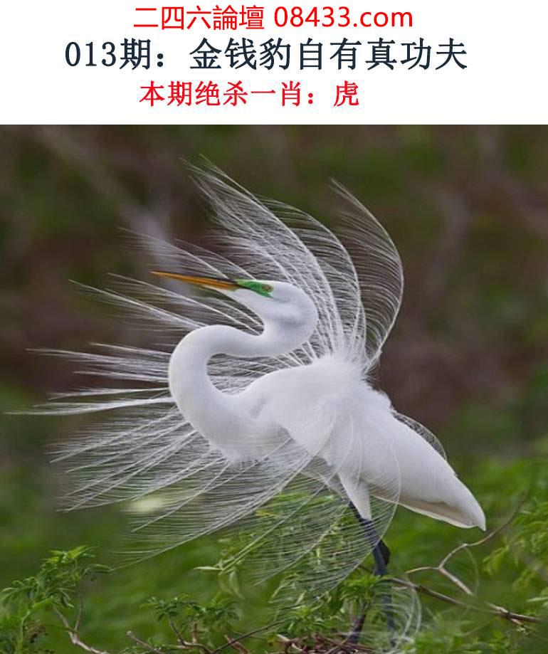 013期:金钱豹自有真功夫