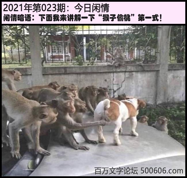 """023期今日闲情:下面我来讲解一下""""猴子偷桃""""第一式!"""