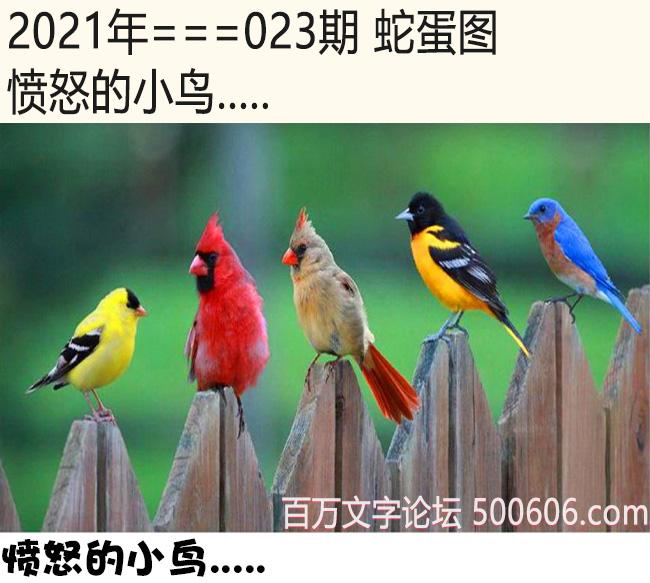 023期蛇蛋图:愤怒的小鸟.....
