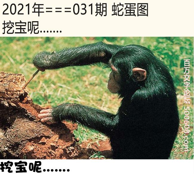031期蛇蛋图:挖宝呢.......