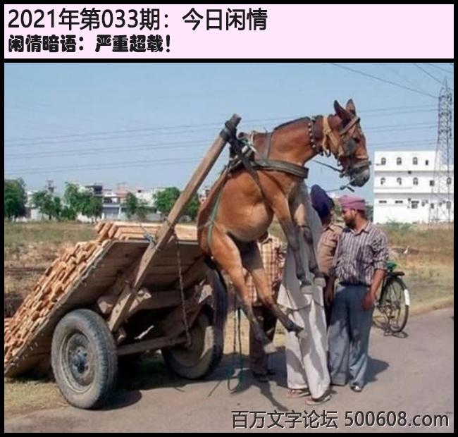 033期今日闲情:严重超载!