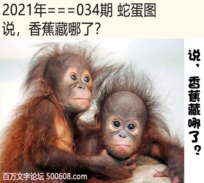 034期蛇蛋图:说,香蕉藏哪了?