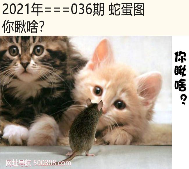 036期蛇蛋图:你瞅啥?