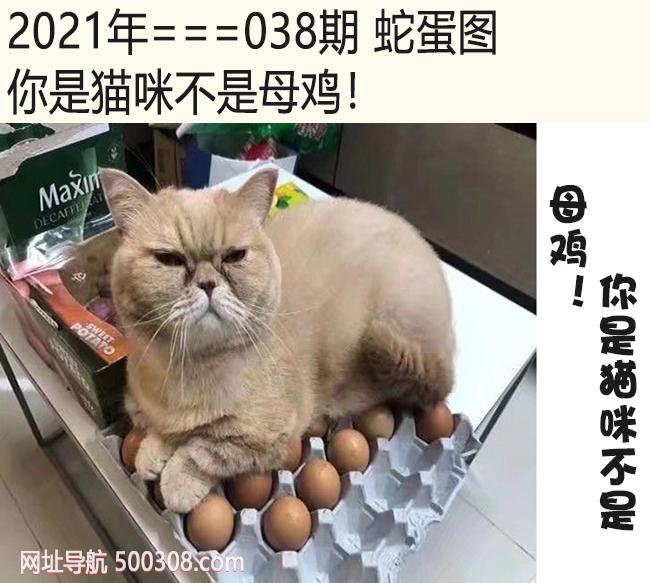 038期蛇蛋图:你是猫咪不是母鸡!