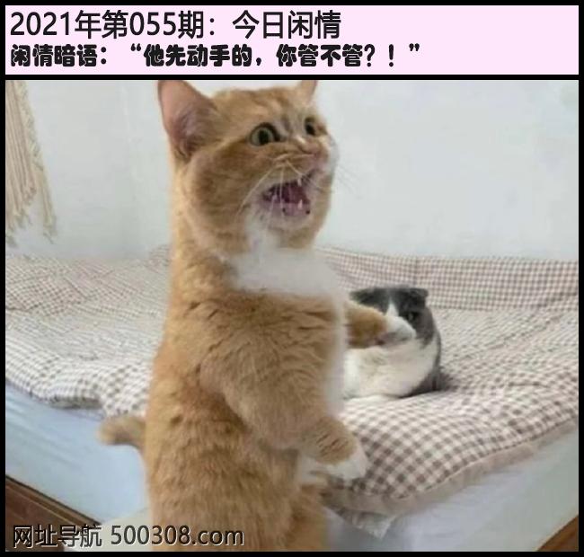 """055期今日闲情:""""他先动手的,你管不管?!"""""""
