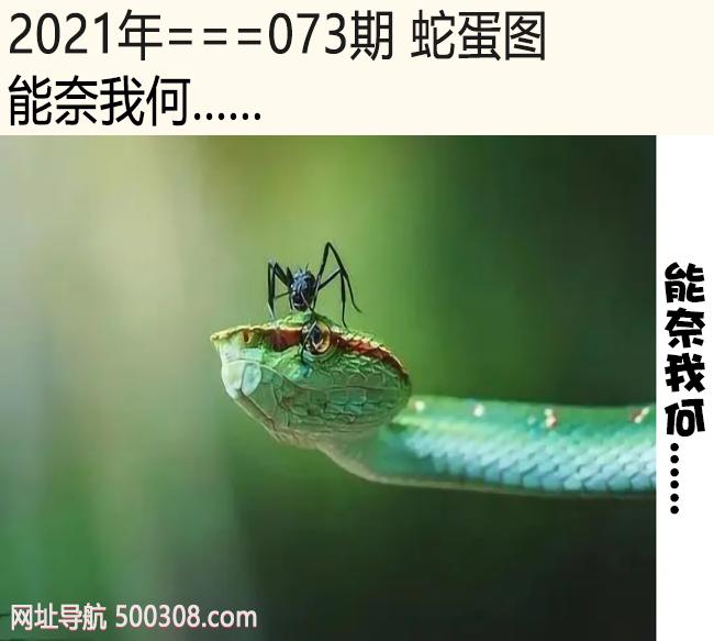 073期蛇蛋图:能奈我何......