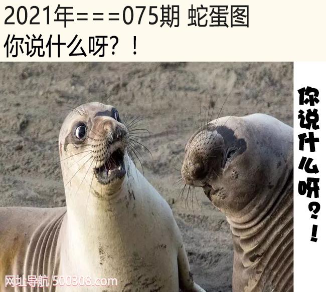 075期蛇蛋图:你说什么呀?!