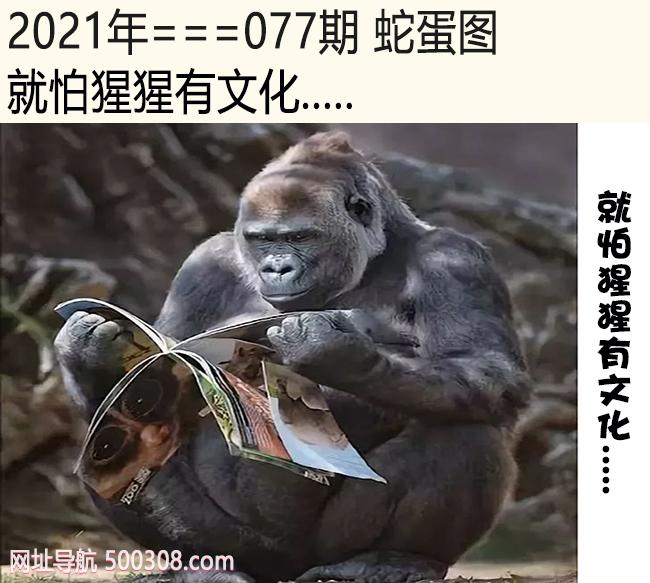077期蛇蛋图:就怕猩猩有文化.....