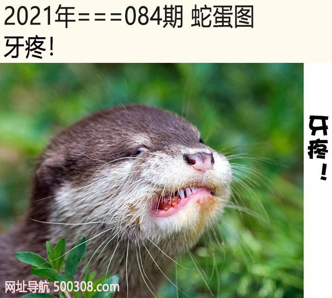 084期蛇蛋图:牙疼!